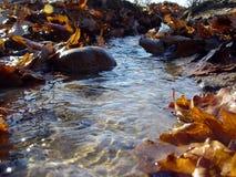 秋天透明小溪的春天 免版税库存图片