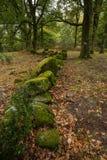 秋天道路在'末多da Albergaria'Geres,国立公园 库存图片