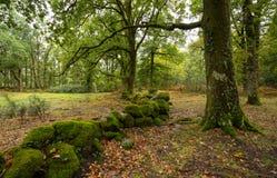 秋天道路在'末多da Albergaria'Geres,国立公园 库存照片