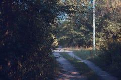 秋天道路在有树的一个公园 库存照片