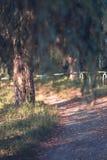 秋天道路在有树的一个公园 免版税库存照片