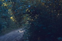 秋天道路在有树的一个公园 免版税库存图片