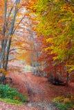 秋天道路在森林里 免版税库存照片