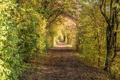 秋天道路在森林 免版税库存照片