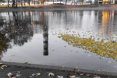 秋天都市河撒布与下落的叶子,反射在水中是可看见的管子植物 图库摄影