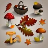 秋天采蘑菇,并且橡木离开 向量例证