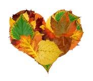 秋天重点叶子 免版税图库摄影
