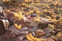 秋天野餐平的位置 免版税库存图片