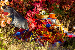 秋天野餐 库存照片