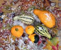 秋天金瓜加上叶子和用sno盖的橡子装饰 库存照片