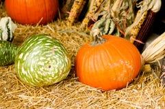 秋天金瓜和南瓜 库存图片
