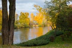 秋天金黄叶子秀丽在一个池塘的桦树的岸的 免版税库存图片