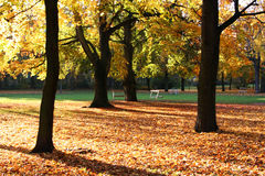 秋天金黄结构树 库存照片