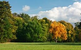 秋天金黄绿色横向橡木公园 免版税图库摄影