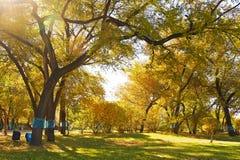 秋天金黄树 库存图片