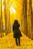 秋天金黄银杏树树和少妇 库存图片