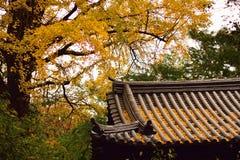 秋天银杏树叶子&日本人寺庙 免版税库存图片