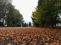 秋天银行上色德国莱茵河结构树黄色 库存图片