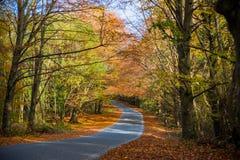 秋天银行上色德国莱茵河结构树黄色 免版税库存图片