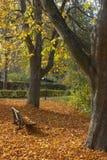 秋天长凳公园 库存照片