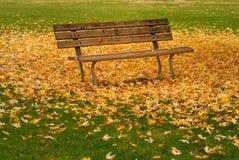秋天长凳叶子 库存图片