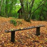 秋天长凳森林 免版税库存图片