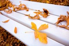 秋天长凳白色 库存照片