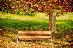 秋天长凳结构树 库存照片