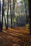 秋天阳光木头 库存照片