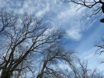 秋天阴沉的天空和不生叶的树 免版税库存图片