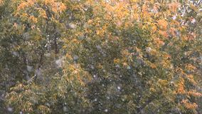 秋天降雪慢动作射击在退色的树背景的与少量干燥叶子的 股票录像