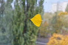 秋天雨下落 免版税库存图片