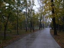 秋天雨 图库摄影