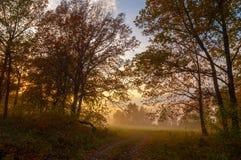 秋天雾在混杂的森林里 图库摄影
