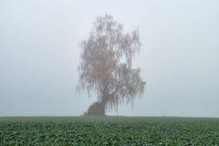 秋天雾在立陶宛 图库摄影