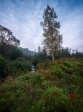 秋天雾有薄雾的早晨风景 库存图片