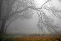 秋天雾森林早晨风景 库存照片