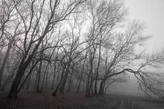 秋天雾森林早晨风景 库存图片
