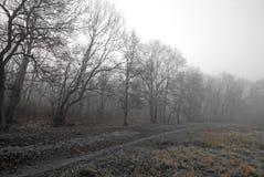 秋天雾森林早晨风景 免版税库存图片