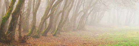 秋天雾森林早晨风景 免版税库存照片