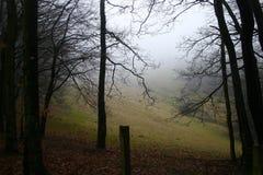秋天雾森林 库存照片