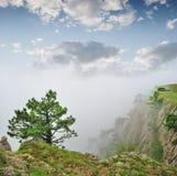 秋天雾横向结构树 图库摄影