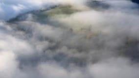 秋天雾漂浮在树中的风景 影视素材