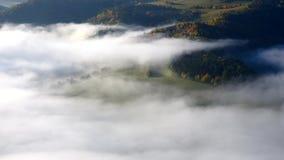 秋天雾漂浮在树中的风景 股票视频