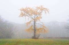 秋天雾结构树 免版税库存图片