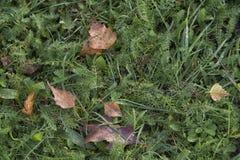 秋天青苔和叶子背景 免版税库存图片