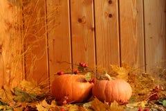 秋天静物画:反对干燥槭树背景的两个南瓜离开 库存图片