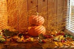 秋天静物画:反对干燥槭树背景的两个南瓜离开 库存照片