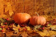 秋天静物画:反对干燥槭树背景的两个南瓜离开 免版税库存照片