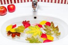 秋天静物画在卫生间里 洗涤叶子,苹果 库存图片